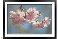 """""""Antique blossoms"""", Framed Mounted Print"""