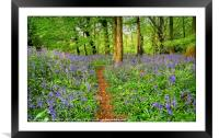 """Evening light in the bluebell wood 3"", Framed Mounted Print"