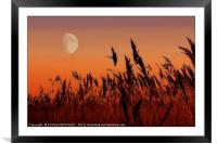 Moon over Reeds, Framed Mounted Print
