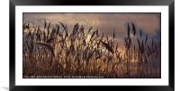 """Reeds in a breeze"", Framed Mounted Print"