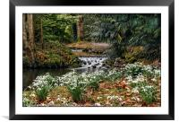 """Snowdrops by an icy stream"", Framed Mounted Print"