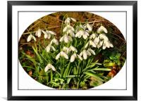"""""""Snowdrops in memory"""", Framed Mounted Print"""
