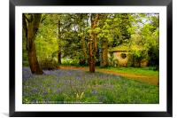 """""""Little Arbour  in the Bluebell wood"""", Framed Mounted Print"""