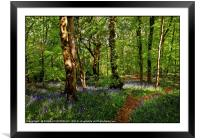 """Taking a stroll through a sunny wood"", Framed Mounted Print"