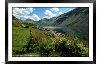 """""""Foxglove and reflections at Wastwater"""", Framed Mounted Print"""
