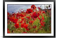 """""""Poppies in the breeze"""", Framed Mounted Print"""