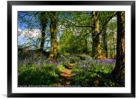 """Afternoon sunshine in the bluebell wood"", Framed Mounted Print"