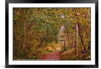 """""""A walk in the Autumn woods"""", Framed Mounted Print"""