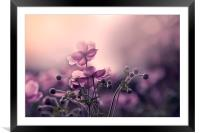 Japanese Anemone , Framed Mounted Print