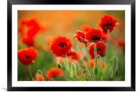 Poppies, Framed Mounted Print