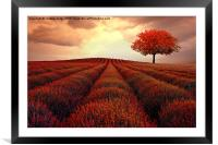 the little Autumn tree , Framed Mounted Print