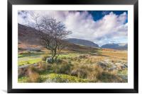 Lone tree track, Framed Mounted Print