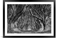 The Dark Hedges Ballymoney County Antrim, Framed Mounted Print