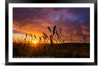 Sunset through the wheat, Framed Mounted Print