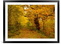 A walk in the autumnal woods, Framed Mounted Print