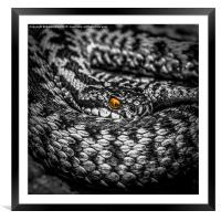The Adders Jewel, Framed Mounted Print