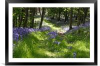 Bluebell Path, Framed Mounted Print