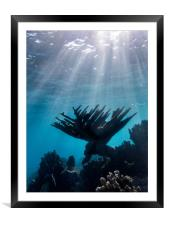 Curacao  Snorkelling  Views , Framed Mounted Print