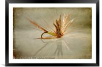 Greenwells Glory Dry Fly, Framed Mounted Print