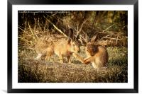hare buddies., Framed Mounted Print