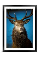 Majestic Stag, Framed Mounted Print