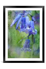 Bluebell Textures, Framed Mounted Print