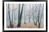 Dreamy Forest, Framed Mounted Print