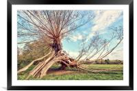 Artistic Tree, Framed Mounted Print