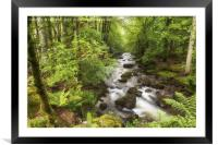 The Ardgartan Forest, Framed Mounted Print