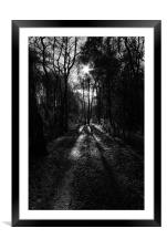 walk in the woods, Framed Mounted Print