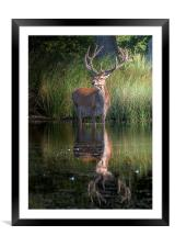 Deer at the Lake, Framed Mounted Print