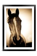 Portrait of a Shropshire horse in sepia in autumn, Framed Mounted Print