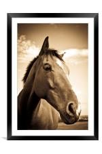Horse in sepia, Shropshire, England, Framed Mounted Print