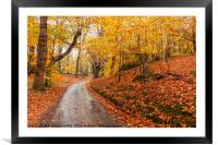 Autumn woodland and winding rural road, Framed Mounted Print