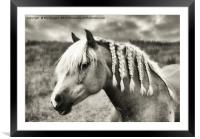 Countryside Horse, Framed Mounted Print