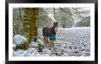 Horse and snow, Framed Mounted Print