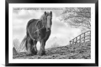 Horse in birtle countryside, Framed Mounted Print