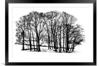 Winter trees in snow - black and white, Framed Mounted Print