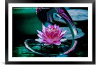 Waterlily, Framed Mounted Print