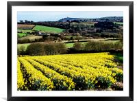 A Host of Golden Daffodils, Framed Mounted Print
