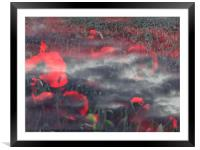Poppies of Remembrance , Framed Mounted Print
