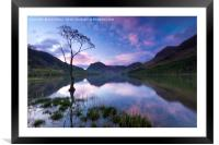 Buttermere tree, English Lake District., Framed Mounted Print
