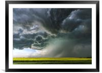 Canola Thunderstorm, Canada, Framed Mounted Print