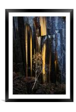 Reclaimed by Nature, Framed Mounted Print