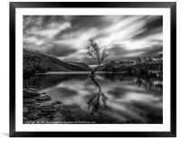 Lonely tree in Mono , Framed Mounted Print