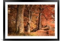 Ousbrough Woods(Colour Textured), Framed Mounted Print