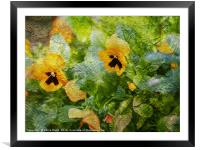 Yellow Pansies Like a Painting, Framed Mounted Print