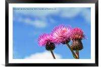 Three Melancholy Thistles Against The Summer Sky, Framed Mounted Print
