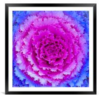 Top View Pink and Blue Plant, Framed Mounted Print