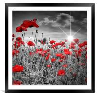 Idyllic Field of Poppies with Sun , Framed Mounted Print